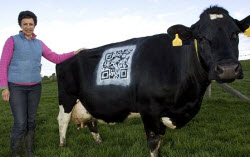 The QR Cow